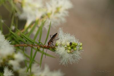 Seed Bug?