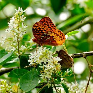 Butterflies 2012-2017