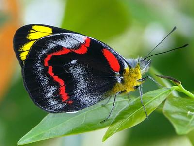 Butterflies & Moths - order Lepidoptera