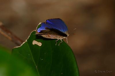 Bright Oak Blue