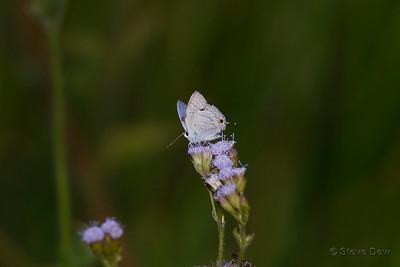 Pale Pea-blue