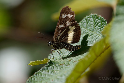Forest Day Moth