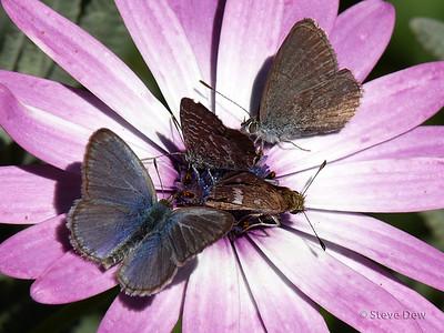 Butterfly Banquet