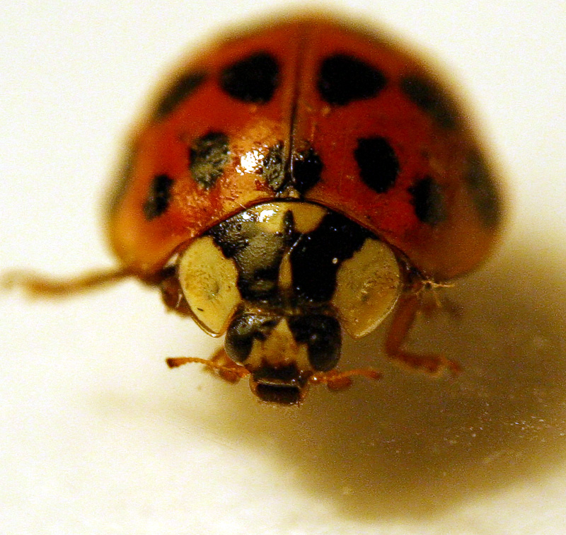 Taken with two 50mm Lens coupled together.