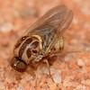 Undescribed genus and species