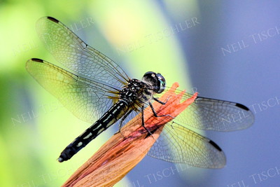 #1191 dragonfly