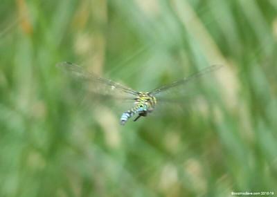 Hawker Dragonfly 024
