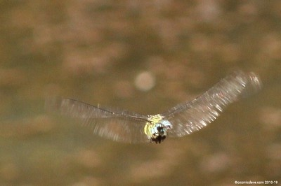 Hawker Dragonfly 019