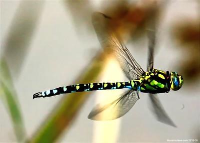 Hawker Dragonfly 028