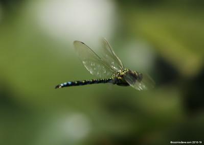 Hawker Dragonfly 022