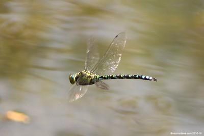 Hawker Dragonfly 023