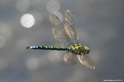 Hawker Dragonfly 020