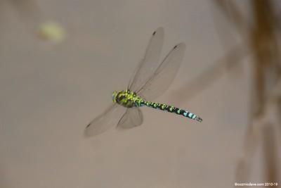 Hawker Dragonfly 016