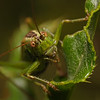 Bush Cricket, September