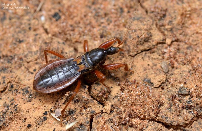 Unknown sp3 juvenile