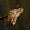 Mottled Umber, December