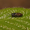 Sawfly, April