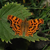 Comma, July