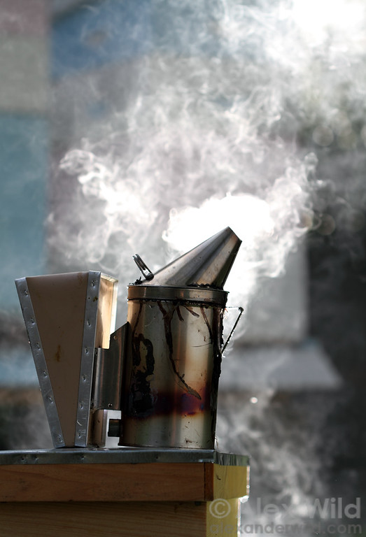 The smoker is the most important tool of the beekeeper, as smoke disarms the bees' defensive response.