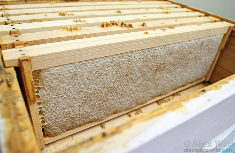 Supers full of ripe, capped honey await extraction.