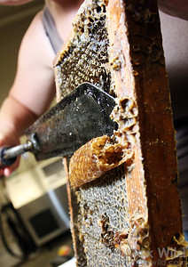 An electric decapping knife melts wax cappings prior to extracting the ripe honey in a centrifuge. The wax can be purified and melted for candles or other beeswax products.