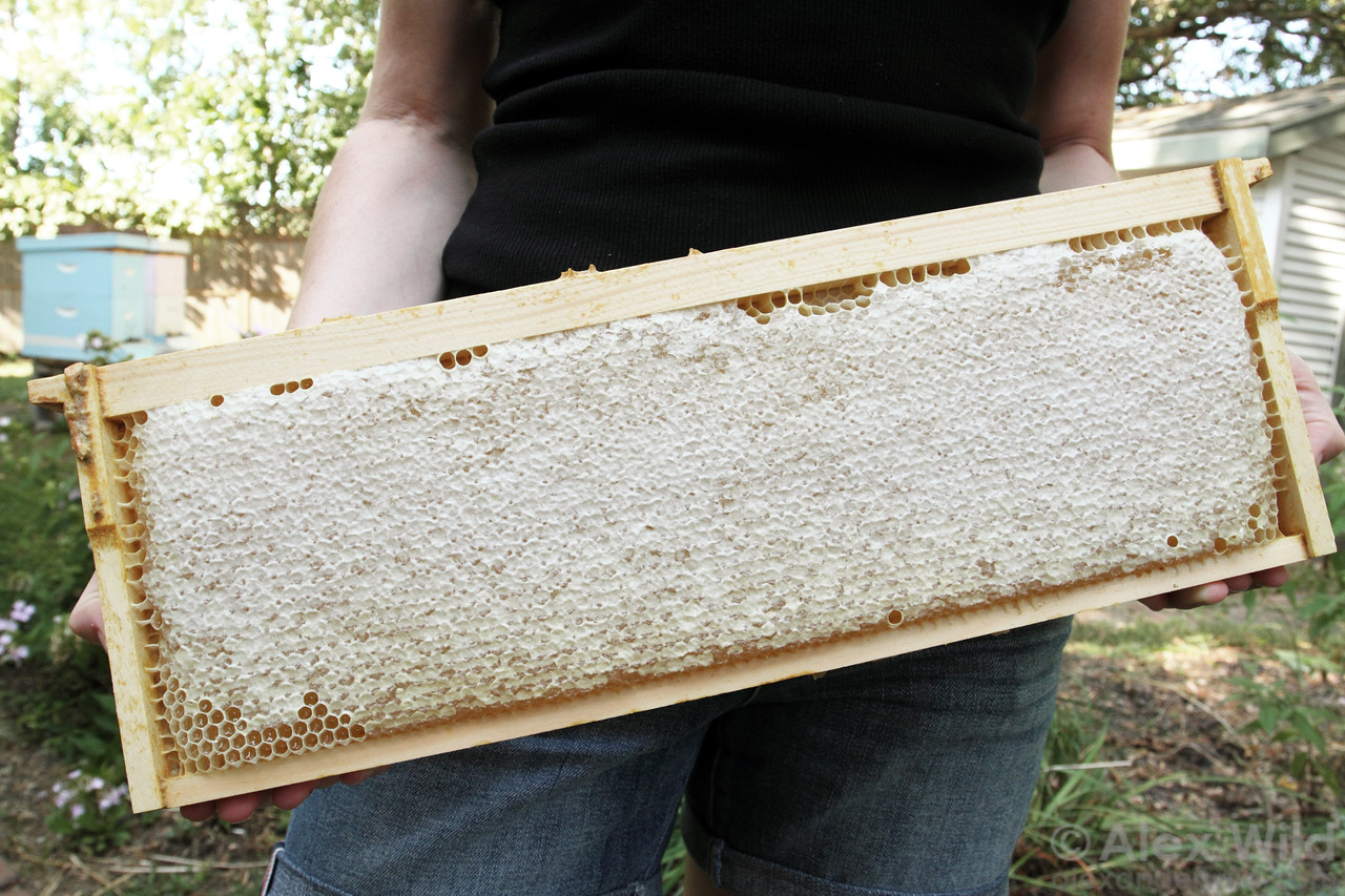 A beautiful frame of ripe, capped honey ready for harvest.