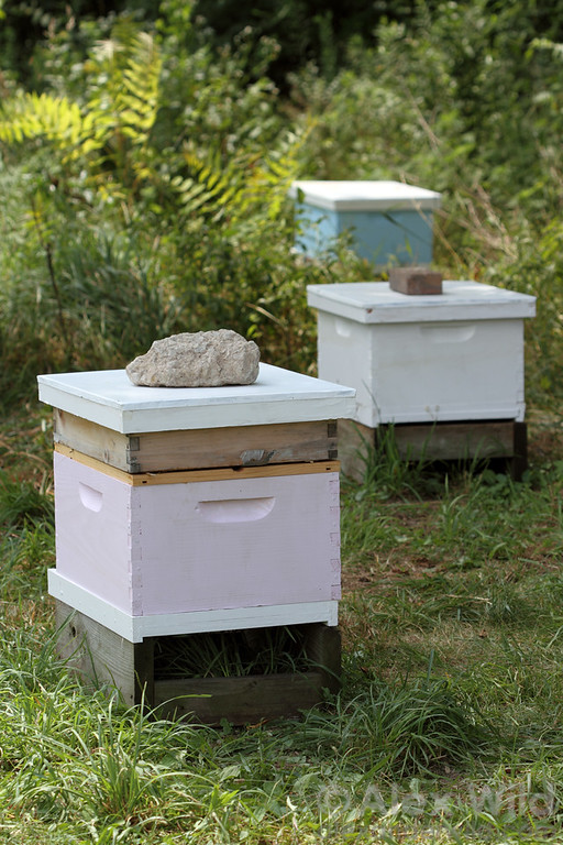 An apiary with a trio of young colonies hived in standard Langstroth boxes.