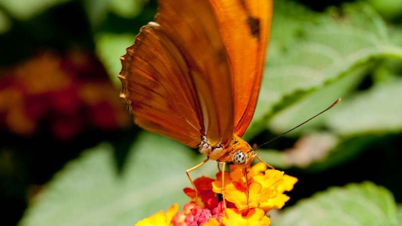 Another image from the Butterfly Pavilion associated with the Los Angeles Natural History Museum.