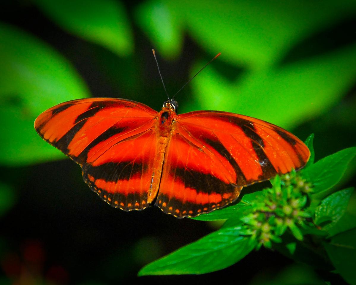 Butterfly World Coconut Creek, Florida ©2009