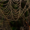 Dew-covered Spider web