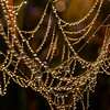 Spider web pearl necklace