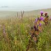 Monarchs roosting in fog