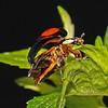 LadybirdLadybird, June
