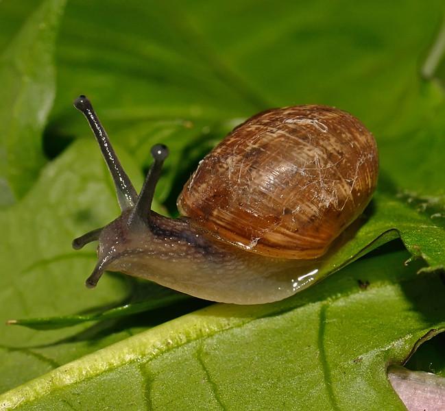 Snail, April