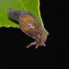 Slug, May