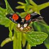 Ladybird, June