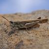 Grasshopper, March
