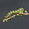 Hyles sammuti larva, October