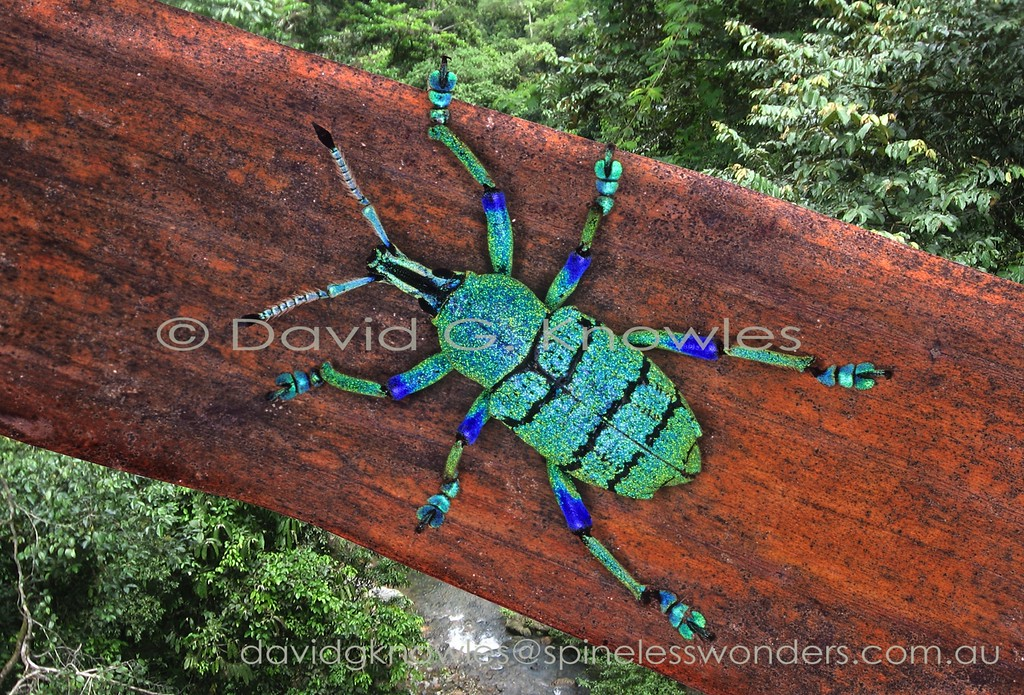 Eupholus weevil patrols log.Warning colours may explain the striking coloration though ultimately its predators may view it in UV. Despite these colours locals eat them like lollies