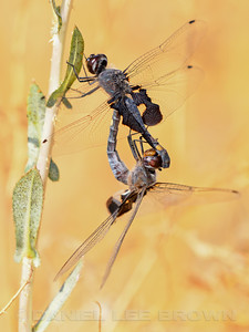 BLACK_SADDLEBAGS_MRP_SAC_CO_CA_2016-09-10_D02_2500_7893