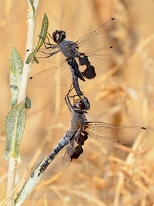 BLACK_SADDLEBAGS_MRP_SAC_CO_CA_2016-09-10_D02_2500_7918