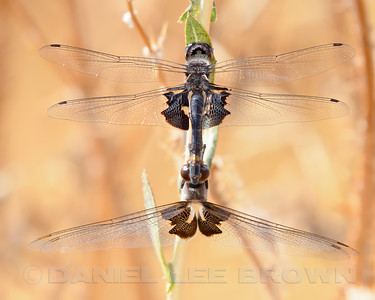 BLACK_SADDLEBAGS_MRP_SAC_CO_CA_2016-09-10_D02_2500_7871