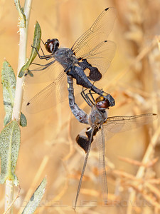 BLACK_SADDLEBAGS_MRP_SAC_CO_CA_2016-09-10_D02_2500_7899