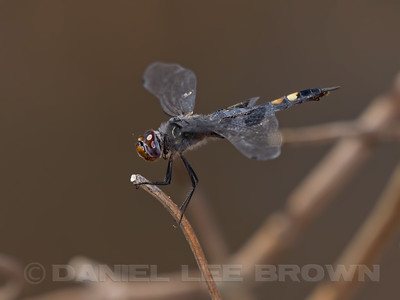 BLACK_SADDLEBAGS_ARP_SAC_CO_CA_2016-09-11_D02_2500_8086