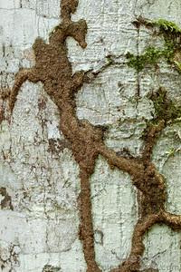 Termite trail