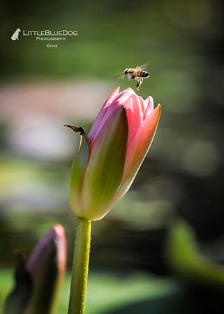 IMG_5994SABOTdragonflies41lbd