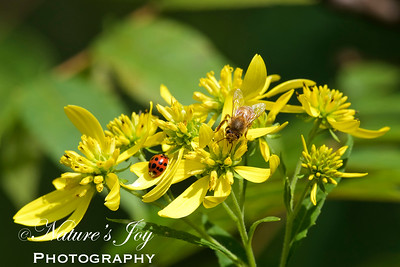 Honey Bee & Lady Bug