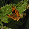 Comma, August