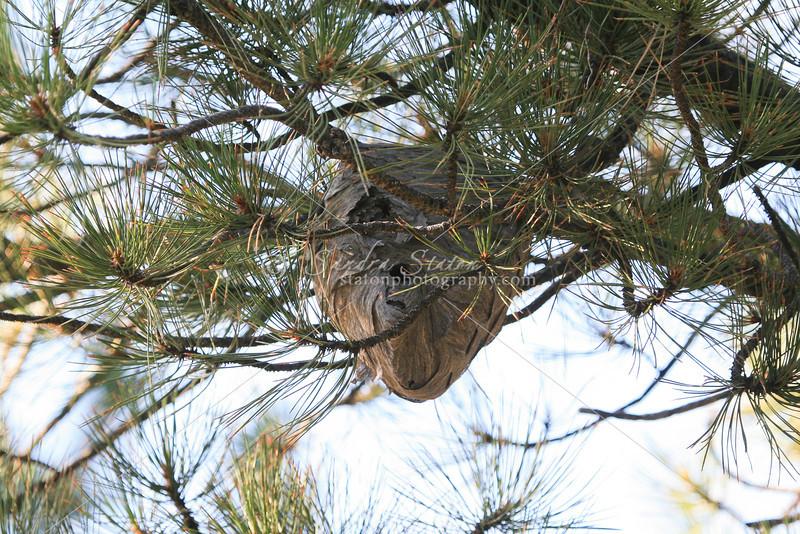 Hornets Nest_SS2815
