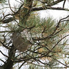 Hornets Nest_SS4081